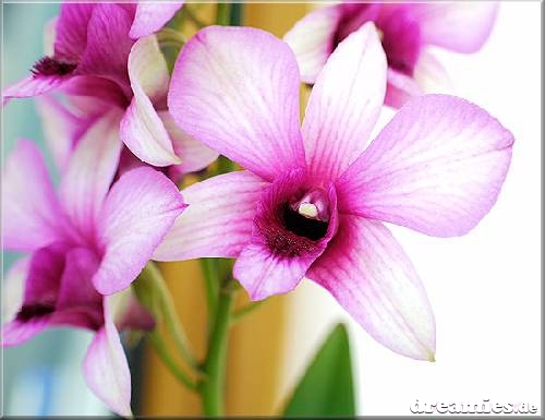 صور زهور منوعة C86broy5zl