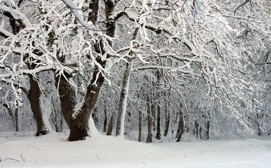 Zimski pejzaži-Winter landscapes - Page 6 Tm2cljkp1a7